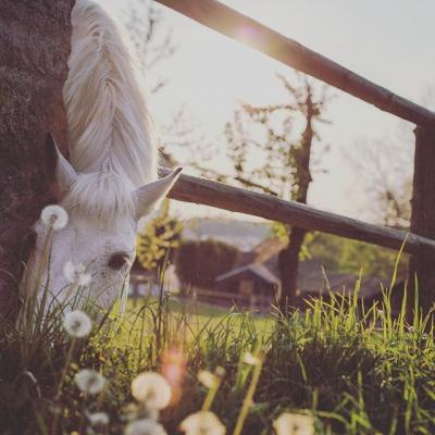 7 tips om je paard op gewicht te houden
