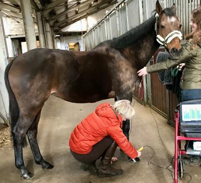 Houd je paard gezond - Ruiterstad Magazine